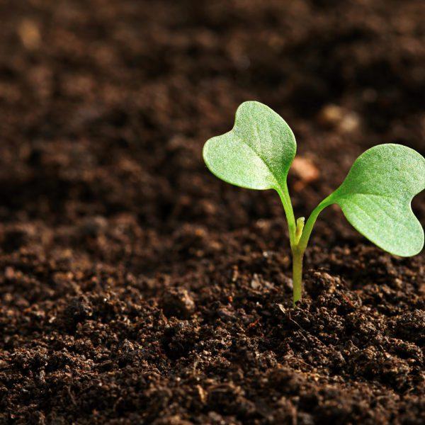 Pixabay Erde mit Pflanze